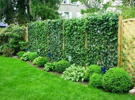 Как сделать живую изгородь на даче своими руками?